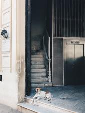 Įėjimo į pastatą sargas.